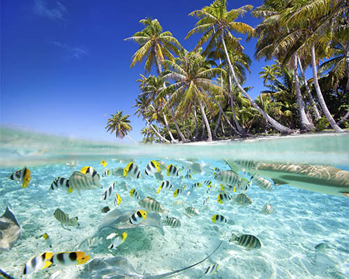 Tahiti & the Tuamoto Islands